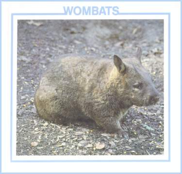 Wombats book by Lynn Stone