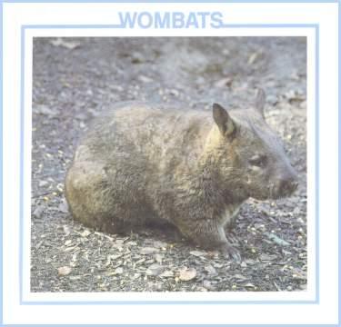 Wombats by Lynn Stone