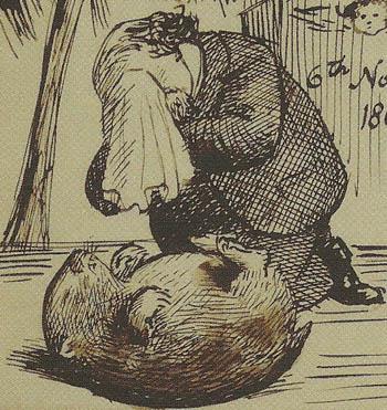 Rossetti's Wombat, Top