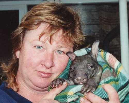 Orphaned Hairy-nosed wombat joey