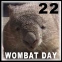 Wombat Day Sticker version 2