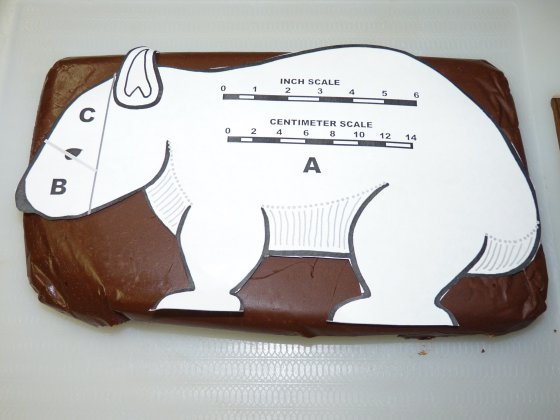 Wombat Fudge Pattern